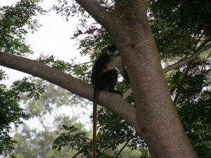 Monkey in tree.jpg
